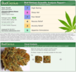 Medical Marijuana Reports